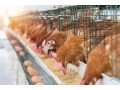 poultry-farm-for-sale-small-0