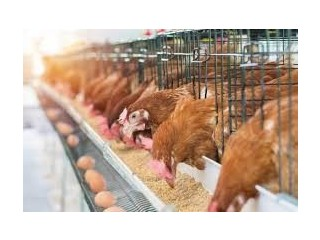 Poultry Farm For Sale