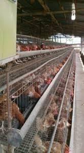 poultry-farm-for-sale-big-1