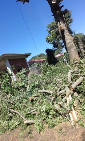 dsl-tree-services-big-3